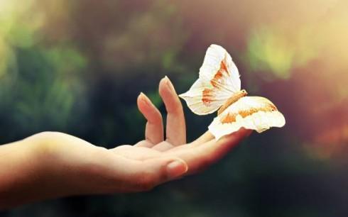 main-ouverte-papillon-1-490x306